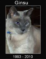 Our much loved Siamese, Ginsu, died in his sleep on February 17, 2010