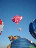 It is not unusual to see pink elephants in the morning sky above Corrales.  Nellie B is a regular at the Balloon Fiesta.